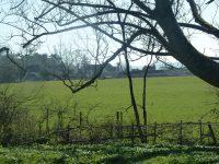 Brook Lodge Farm